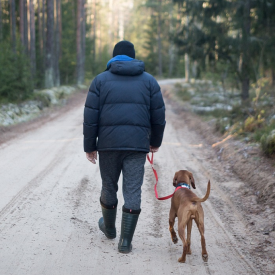 trucking with pets - owner walking dog in wooded area in cold weather
